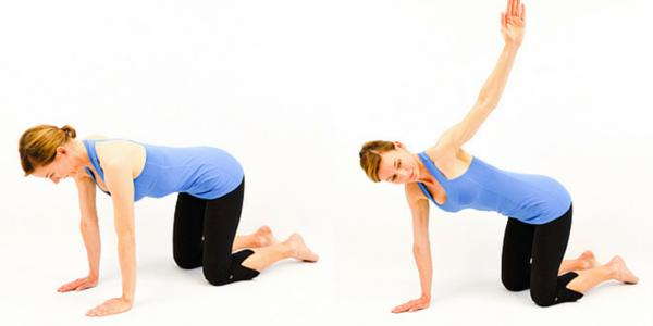 Exercise – Quadruped Trunk Rotation